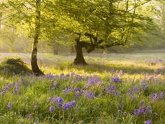 UK woodlands face a barrage of threats, a new report warns (Georgina Smith/WTML/PA)