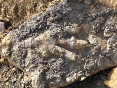 The giant dinosaur footprint found on a Yorkshire beach (Marie Woods/PA)