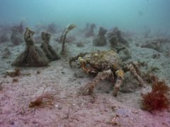 Thousands of seed bags planted in England's largest seagrass planting effort (Ocean Conservation Trust/PA)