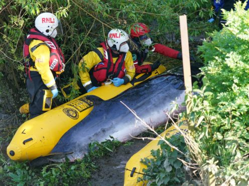 The stranded whale in the River Thames was put down (Yui Mok/PA)