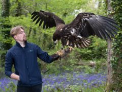 Falconer Charlie Rolle holds Chief, a 10-month-old white-tailed sea eagle (Andrew Matthews/PA)