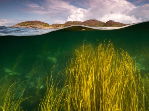 Seagrass can store even more carbon than tropical forests, research found (Mark Kirkland/MCS)