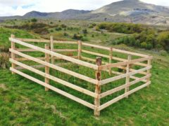One of the tree 'crates' which protect trees from grazing in the Lake District (National Trust/PA)