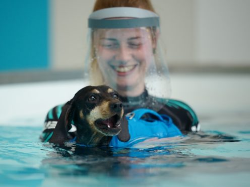 A hydrotherapist with Dixie, a seven-year-old dachshund being treated for back problems at Battersea's new hydrotherapy centre (Yui Mok/PA)