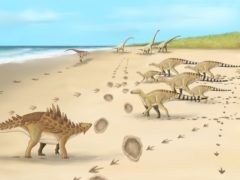 An artist's impression of the last dinosaurs in the UK 110 million years ago at Folkestone, Kent (Meg Jacobs/University of Portsmouth/PA)