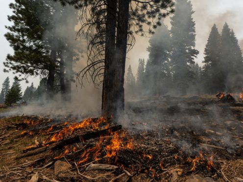 A small brush fire spreads ahead of a containment line near the Northwest edge of the Bootleg Fire in Oregon (Nathan Howard/AP)