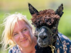 Geronimo the alpaca at Shepherds Close Farm in Gloucestershire, with owner Helen Macdonald (Ben Birchall/PA)