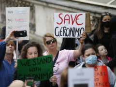Demonstrators in Westminster, central London, during a protest march against the decision to put down Geronimo, the alpaca which has tested positive for tuberculosis (Hollie Adams/PA)