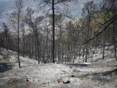 A wasteland of scorched earth and trees, are seen on the third day of wildfires in the Jerusalem mountains (Ariel Schalit/AP)