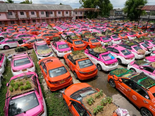 Miniature gardens planted on the roofs of unused taxis in Bangkok (Sakchai Lalit/AP)