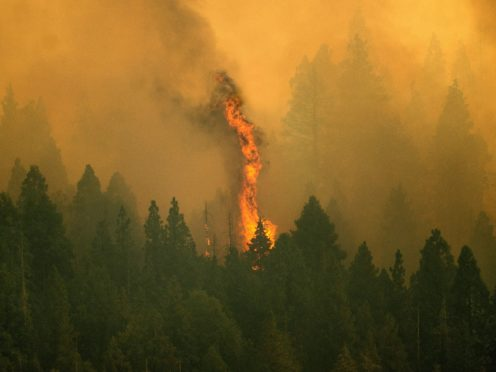 The Windy Fire in Sequoia National Forest, Californis (Noah Berger/AP)