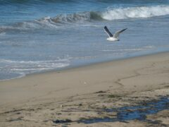 The spill has hit popular beaches in southern California and threatens wildlife reserves (AP Photo/Ringo H.W. Chiu)
