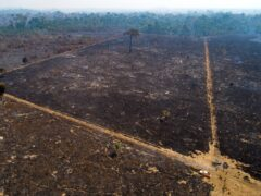 An area consumed by fire and cleared in Brazil (AP)