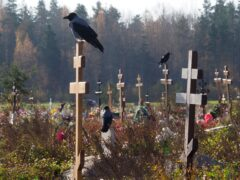 Crows sit on grave crosses in the section of a cemetery reserved for coronavirus victims in Kolpino, outside St Petersburg (Dmitri Lovetsky/AP)