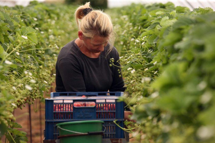 Seasonal workers farmers