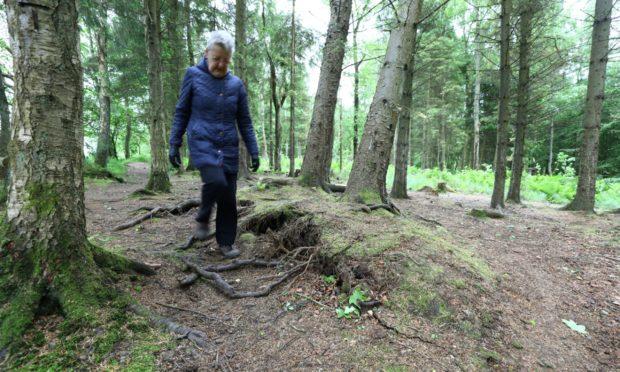 Dorothy McHugh walking in Templeton Woods.