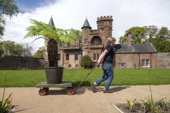 Kate Robinson, head gardener at Hospitalfield, delivers a small tree fern to be placed in the fernery at Hospitalfield.