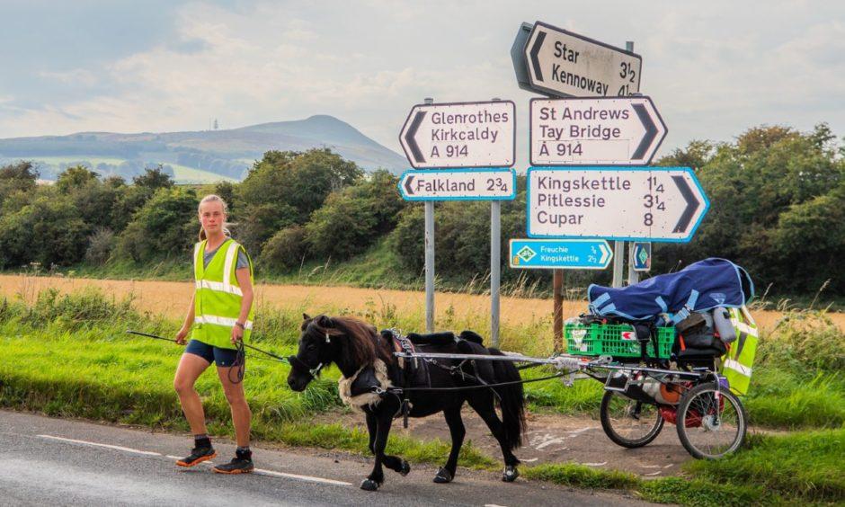 Dundee student pony walked