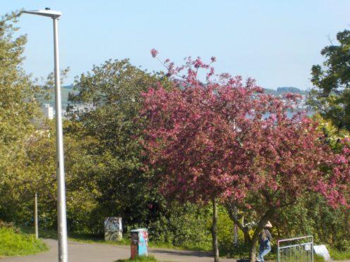 Dundee park