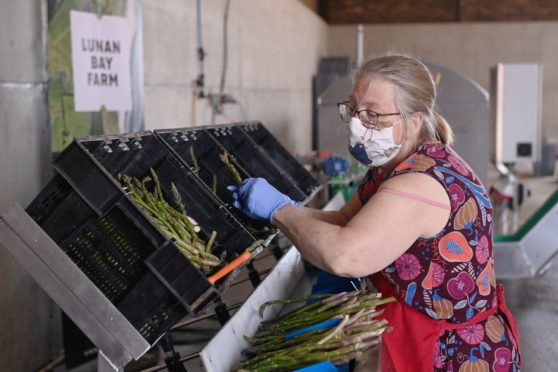 A woman handling boxes of asparagus with a 'Lunan Bay Farm' sign on the wall