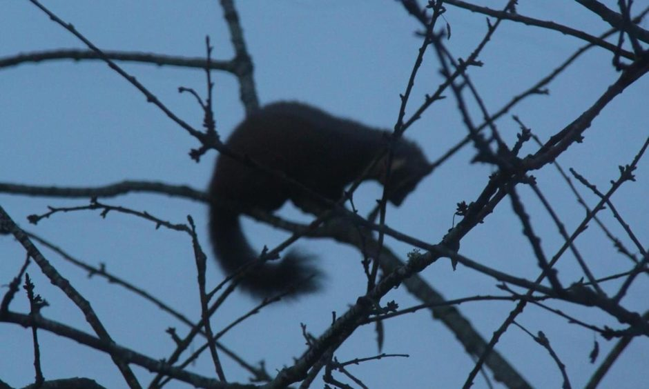 Letham Grange wildlife