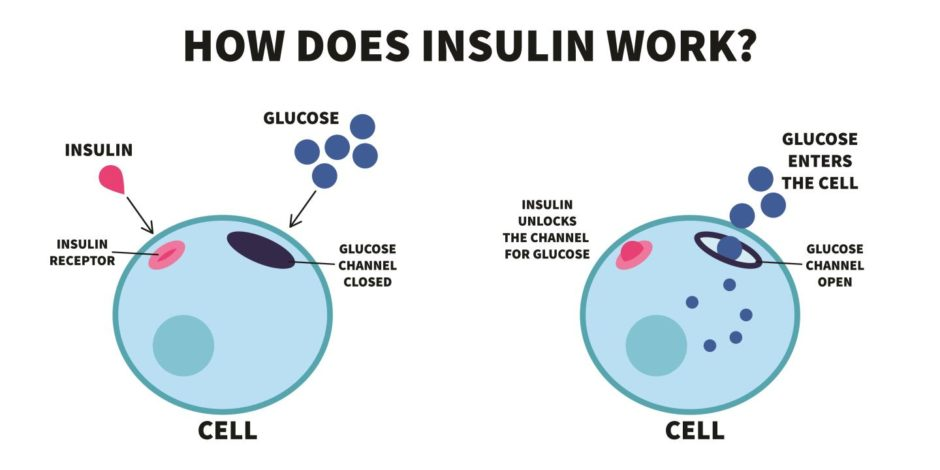 A graphic showing how insulin works in the body's cells