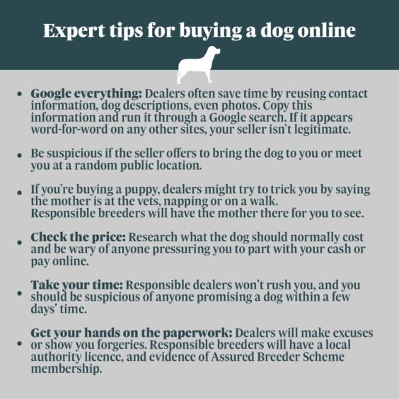 Buying a dog online