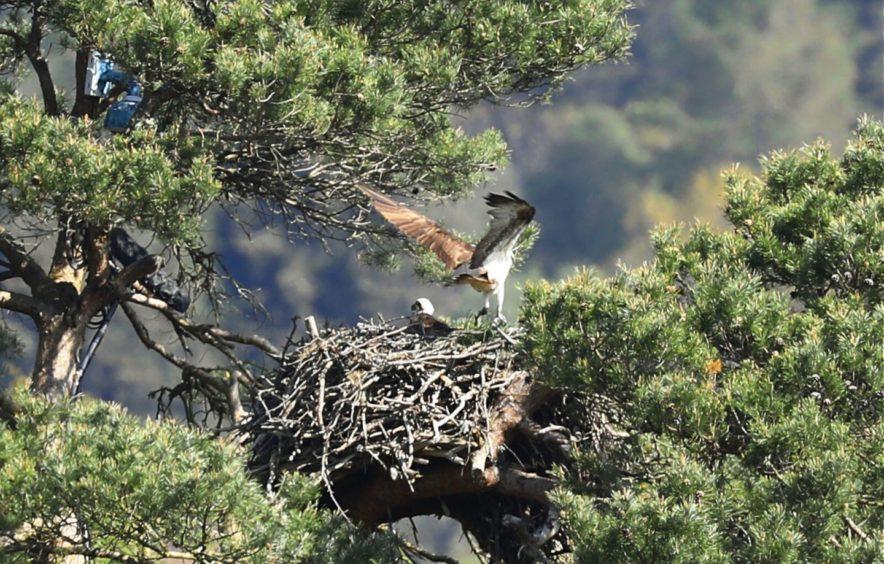 Perthshire loch outdoors wildlife