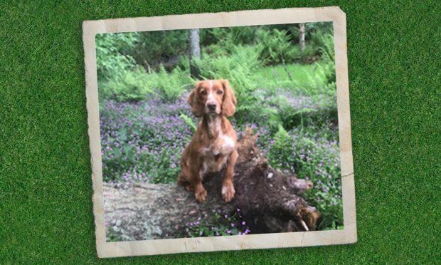 stolen dog perthshire