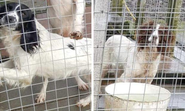 dog theft penalties