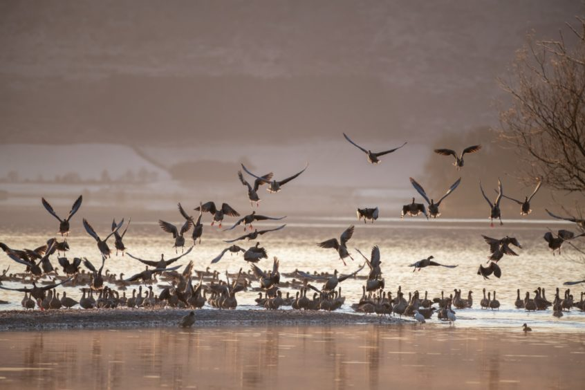 Loch Leven birds