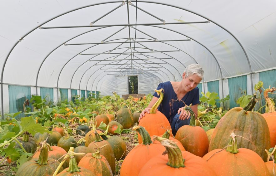 Jenny Fyall owner of Udny Pumpkins.