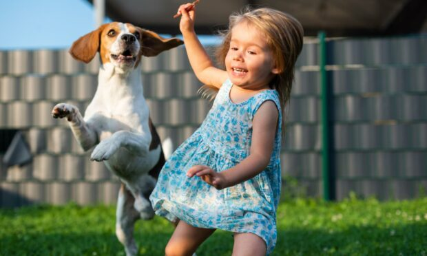 Beagle with a young child - the breed is considered one of the best dogs for families by the American Kennel Club