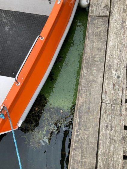 Loch Tay warning algae