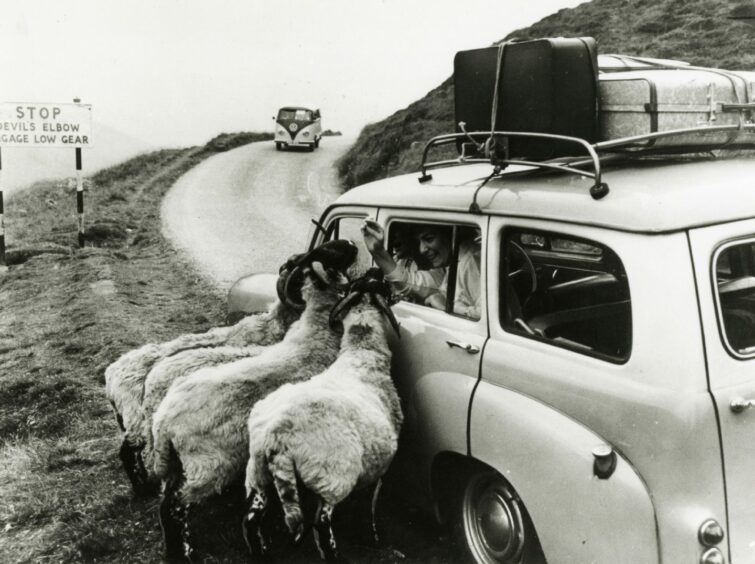 People feeding sheep from a car on the Devil's Elbow.
