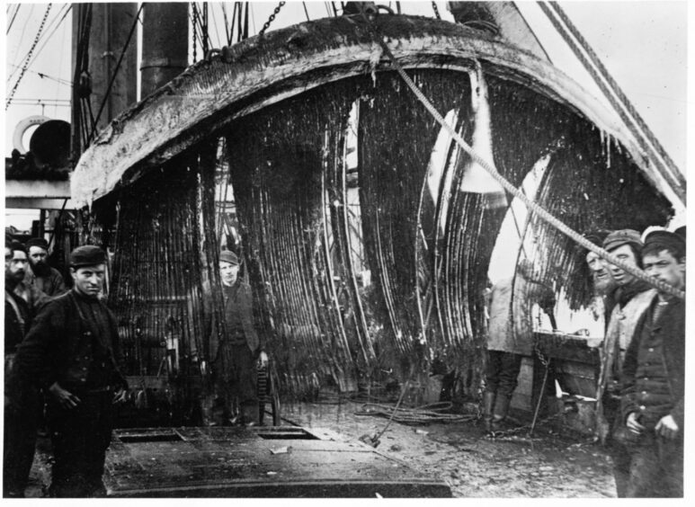 Whalers in Dundee at the height of the gory trade in the Victorian era.