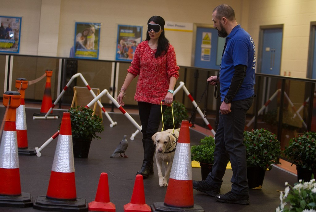 Gayle on a blindfolded walk with Susie and handler David Stewart.