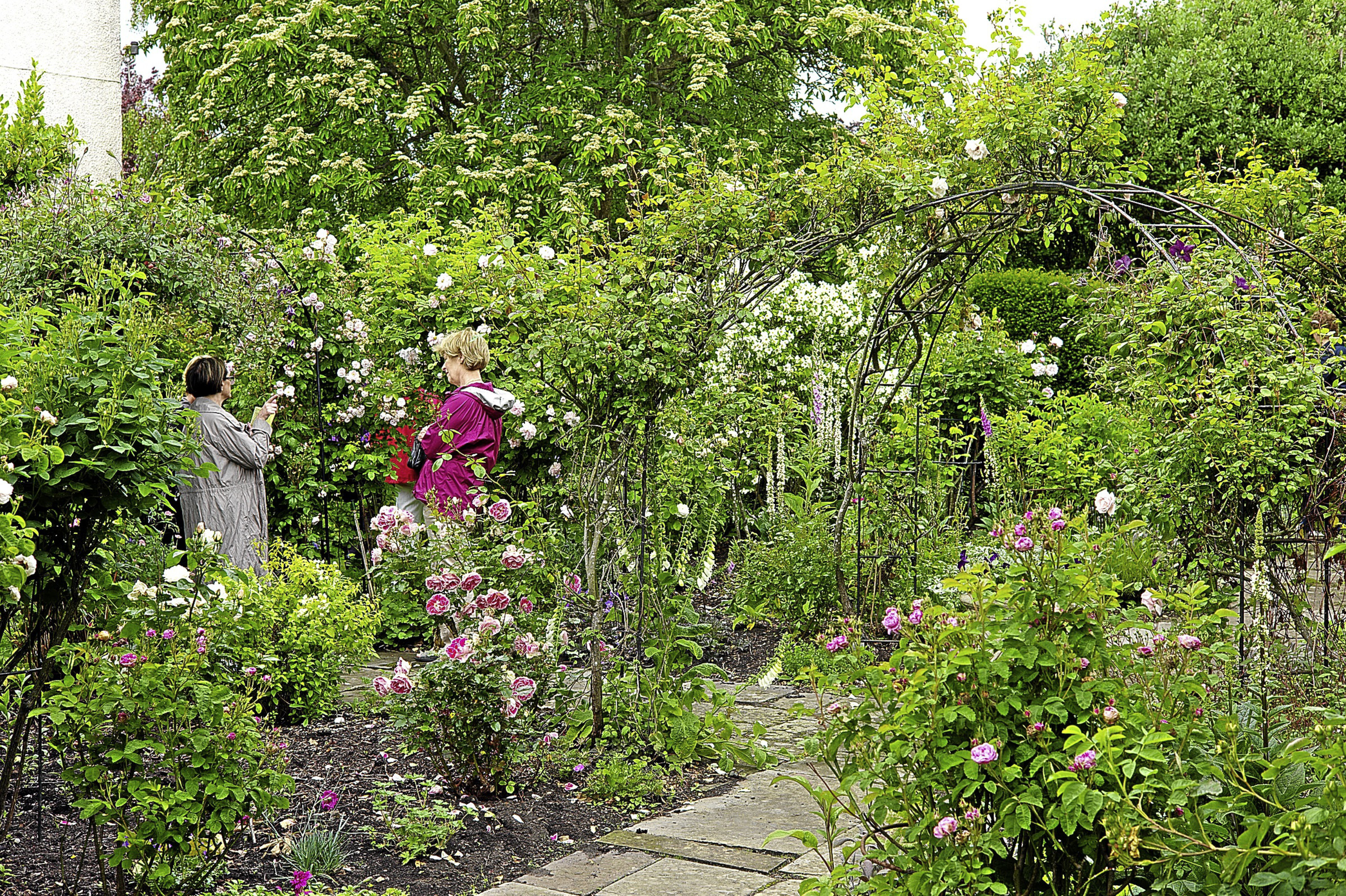 A St Andrews garden opens to the public this weekend