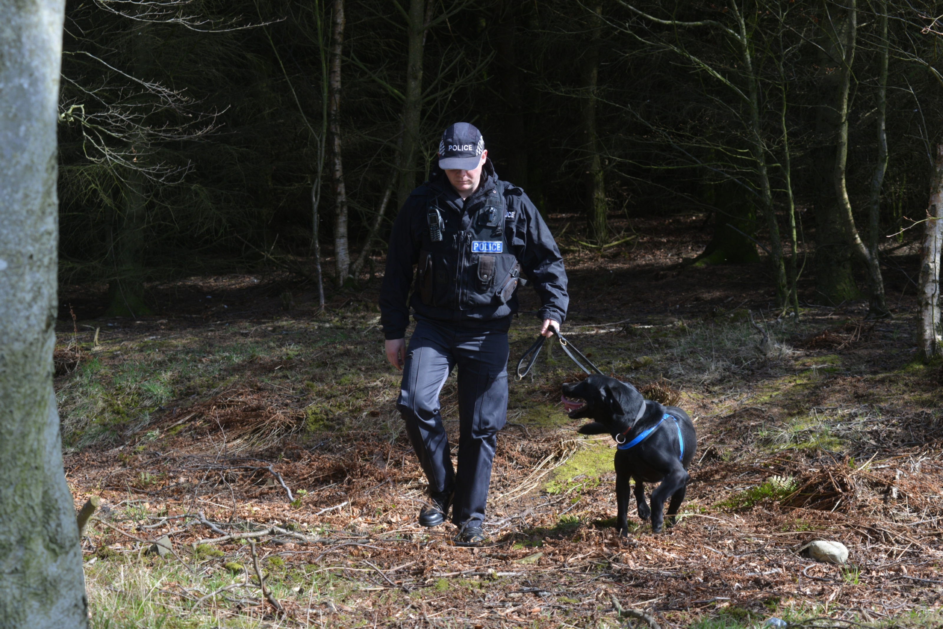 A specially trained police dog searches the woods with his handler.