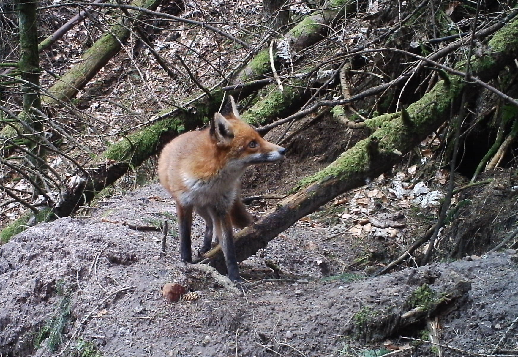 A picture taken with Keith's foxcam.