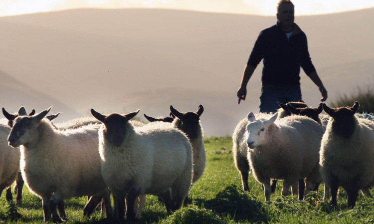 There is no shortage of UK lamb in September and October.