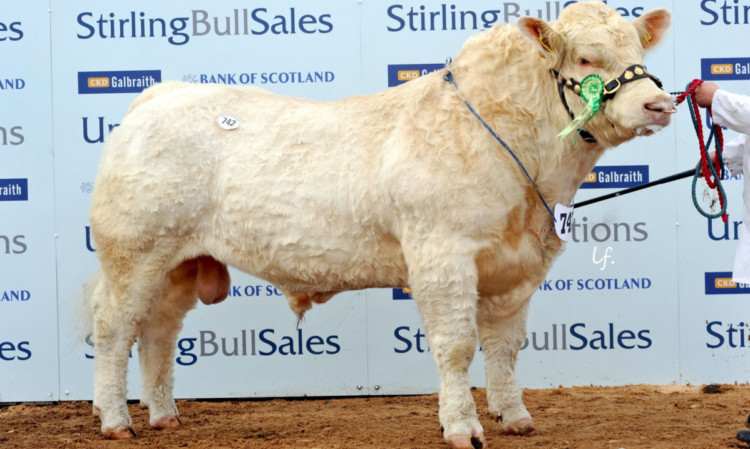Balmyle Headline from W P Bruce, Balmyle, Meigle, sold for the day's top price - 22,000 gns