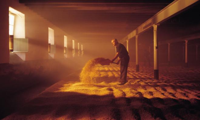 Malt being turned at Balvenie Distillery.
