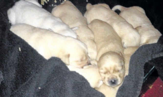 Three of the puppies were found dead at the scene.
