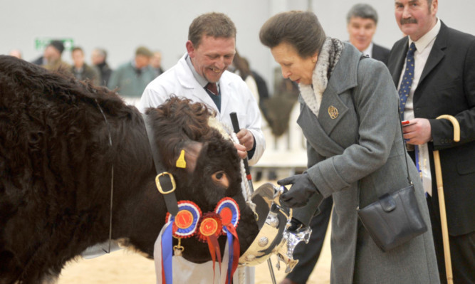 The cup that cheers! HRH The Princess Royal presented the cup to the overall Beef Shorthorn champion bull Lowther Gervase and stockman Mike Clark.
