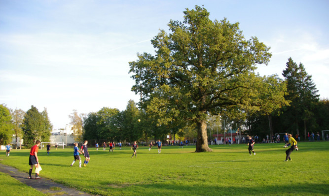 The oak tree in the middle of a football pitch in Estonia which has been awarded the title of European Tree of the Year 2015.