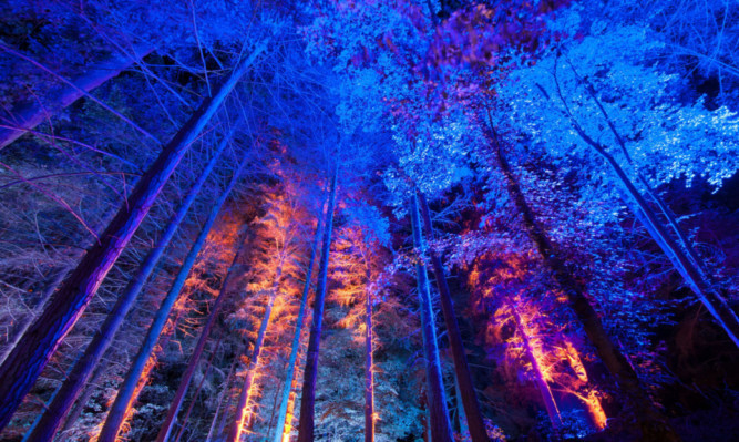 The Enchanted Forest.