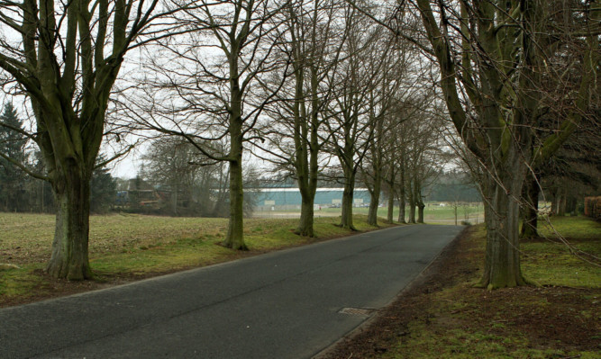 The tree avenue that faces the chop.