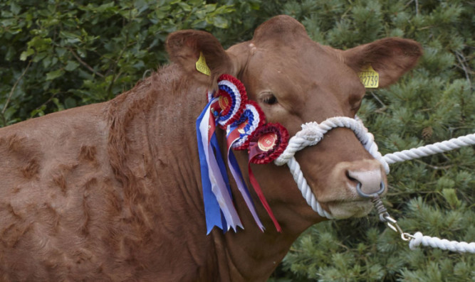 Champion of champions Hoora-Effer from Wilson Peters, Crieff