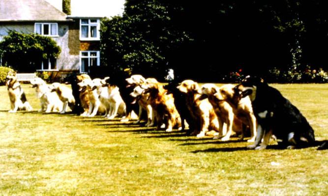 A photo from the centre's archive showing a line-up of different breeds on the lawn at the original Forfar centre.